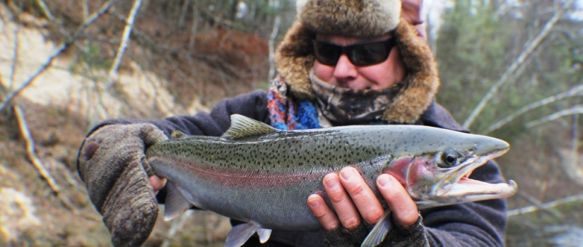 Muskegon river steelhead
