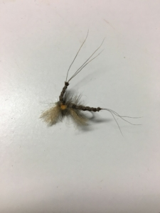 Gray Drake dry fly for Muskegon river trout